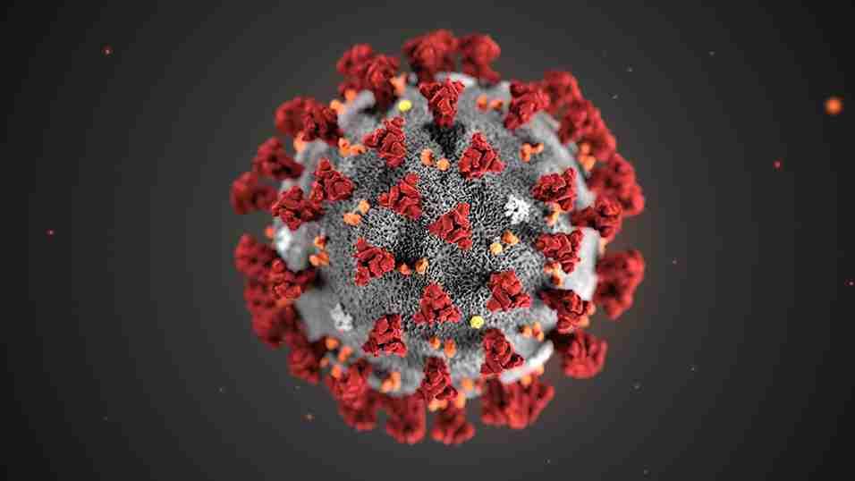 Coronavirus: le domande e risposte dell'Organizzazione Mondiale della Sanità tradotte in italiano